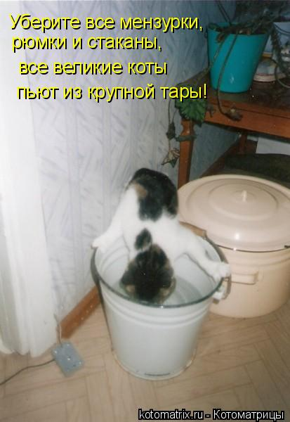 Котоматрица: Уберите все мензурки,  рюмки и стаканы, все великие коты пьют из крупной тары!