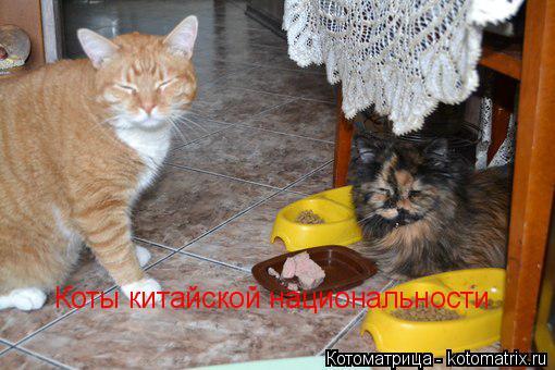 Котоматрица: Коты китайской национальности