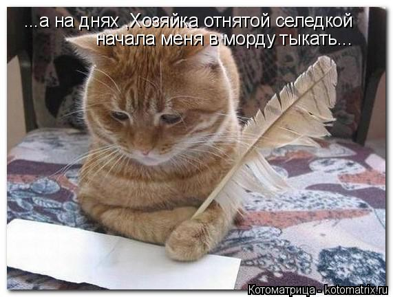 Котоматрица: ...а на днях ,Хозяйка отнятой селедкой начала меня в морду тыкать...