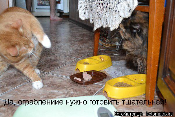 Котоматрица: Да, ограблениие нужно готовить тщательней!