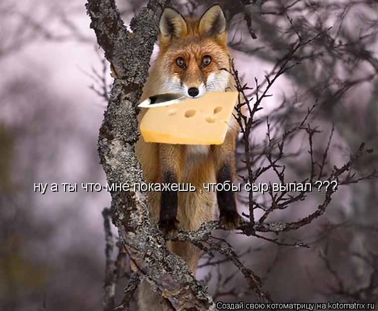 Котоматрица: ну а ты что мне покажешь ,чтобы сыр выпал ???