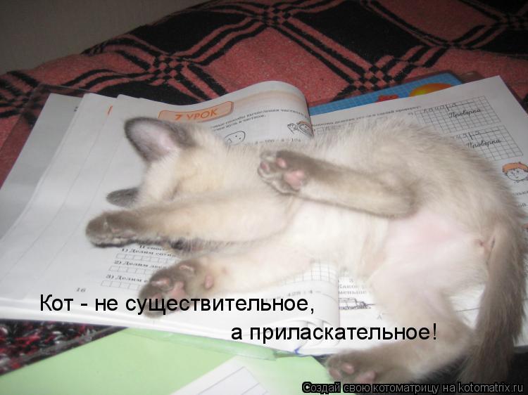 Котоматрица: Кот - не существительное,  а приласкательное!