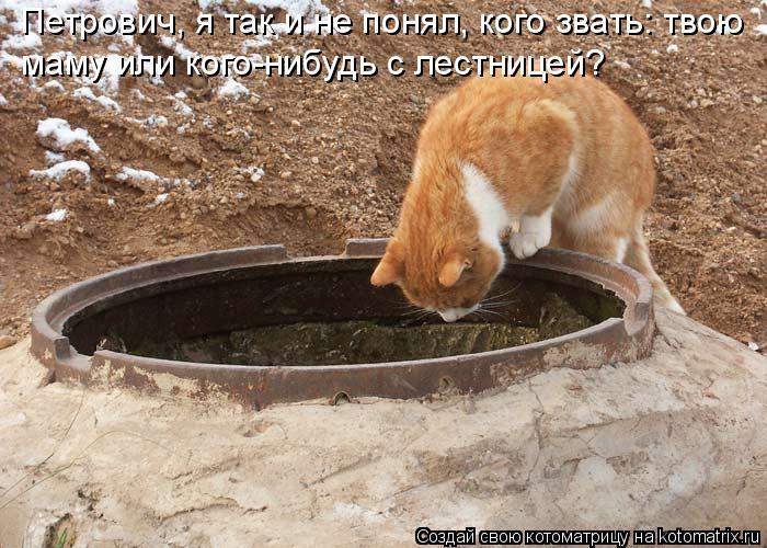 Котоматрица: Петрович, я так и не понял, кого звать: твою  маму или кого-нибудь с лестницей?