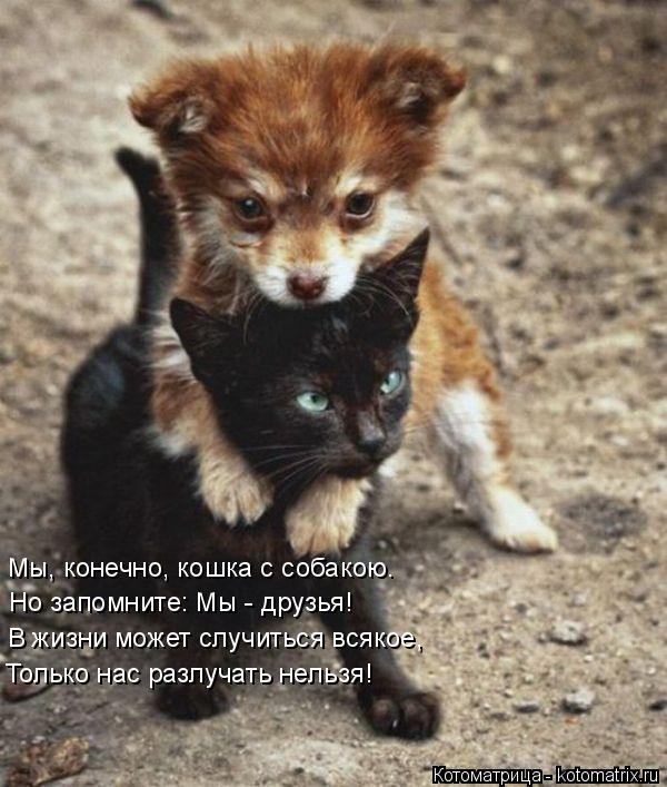 Котоматрица: Мы, конечно, кошка с собакою. Но запомните: Мы - друзья! В жизни может случиться всякое, Только нас разлучать нельзя!