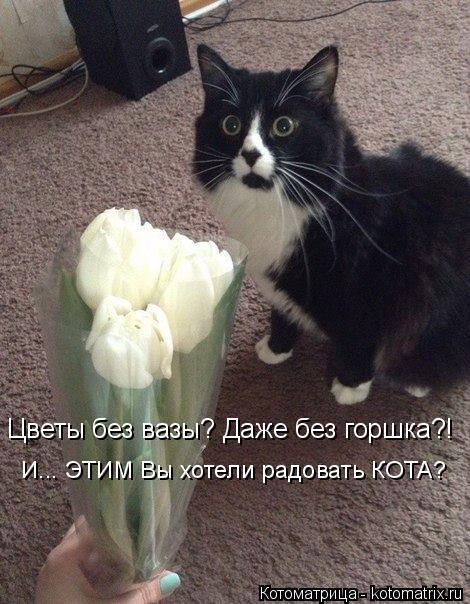 Котоматрица: Цветы без вазы? Даже без горшка?! И... ЭТИМ Вы хотели радовать КОТА?