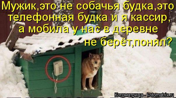 Котоматрица: Мужик,это не собачья будка,это телефонная будка и я кассир, а мобила у нас в деревне  не берёт,понял?