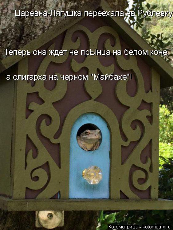 "Котоматрица: Царевна-Лягушка переехала на Рублевку. Теперь она ждет не прЫнца на белом коне,  а олигарха на черном ""Майбахе""!"