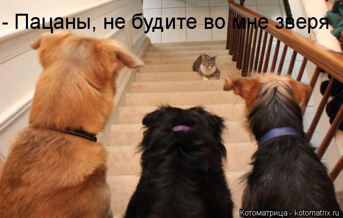 Котоматрица: - Пацаны, не будите во мне зверя