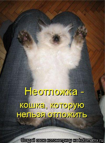 Котоматрица: Неотложка - кошка, которую нельзя отложить