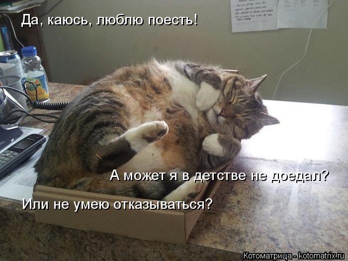 Котоматрица: Да, каюсь, люблю поесть! А может я в детстве не доедал? Или не умею отказываться?