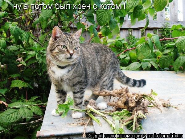 Котоматрица: ну а потом был хрен с котом !