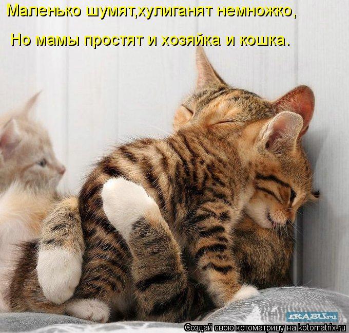 Котоматрица: Маленько шумят,хулиганят немножко, Но мамы простят и хозяйка и кошка.