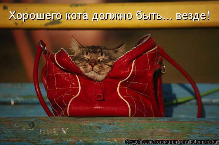 Котоматрица: Хорошего кота должно быть... везде!
