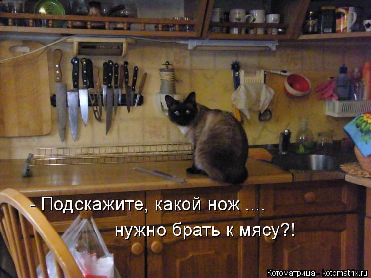 Котоматрица: - Подскажите, какой нож .... нужно брать к мясу?!
