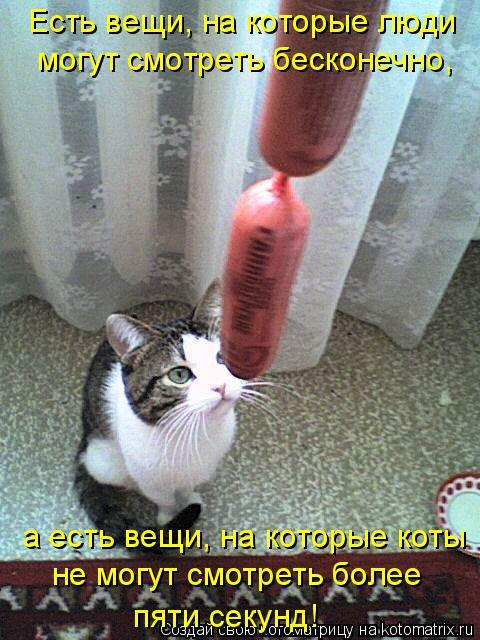 Котоматрица: Есть вещи, на которые люди могут смотреть бесконечно, а есть вещи, на которые коты не могут смотреть более пяти секунд!