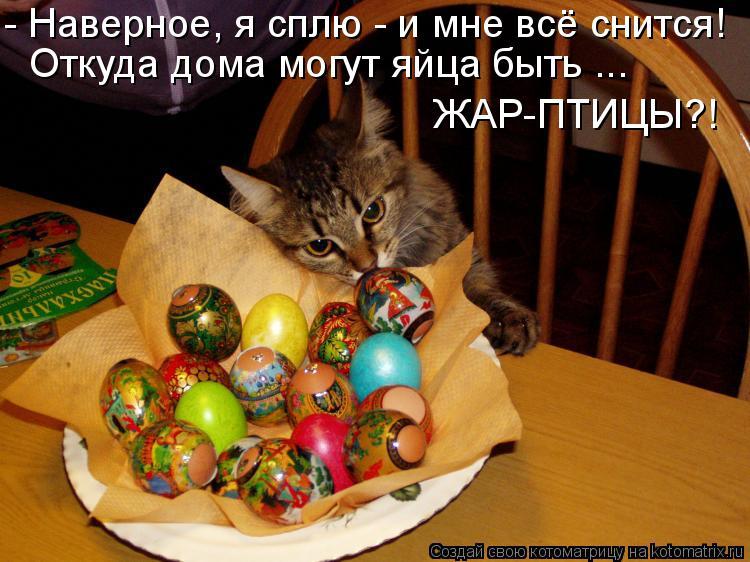 Котоматрица: - Наверное, я сплю - и мне всё снится! Откуда дома могут яйца быть ... ЖАР-ПТИЦЫ?!