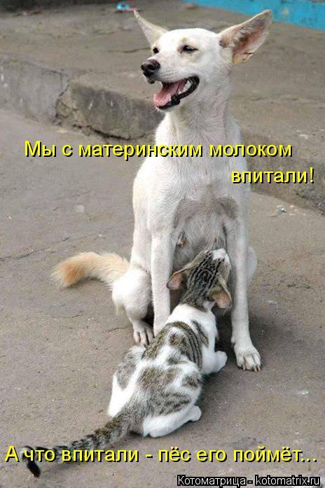 Котоматрица: Мы с материнским молоком  впитали! А что впитали - пёс его поймёт...