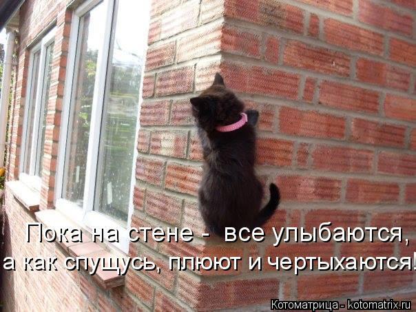 Котоматрица: Пока на стене -  все улыбаются, а как спущусь, плюют и чертыхаются!