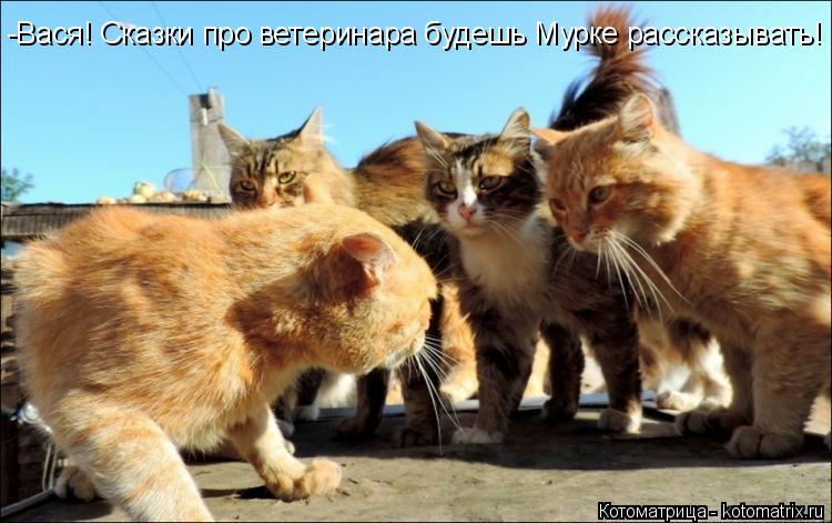 Котоматрица: -Вася! Сказки про ветеринара будешь Мурке рассказывать!