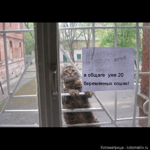Котоматрица: в общаге  уже 20 беременных кошек!