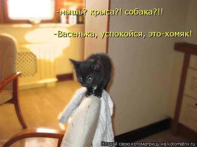 Котоматрица: -Васенька, успокойся, это-хомяк! -мышь? крыса?! собака?!!