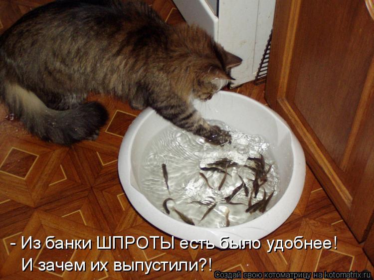 Котоматрица: - Из банки ШПРОТЫ есть было удобнее! И зачем их выпустили?!