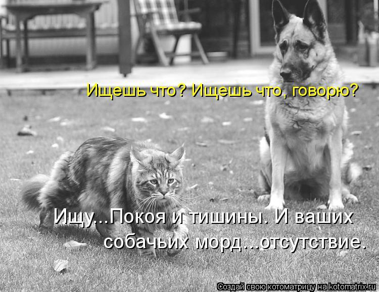 Котоматрица: Ищешь что? Ищешь что, говорю? Ищу...Покоя и тишины. И ваших собачьих морд...отсутствие.