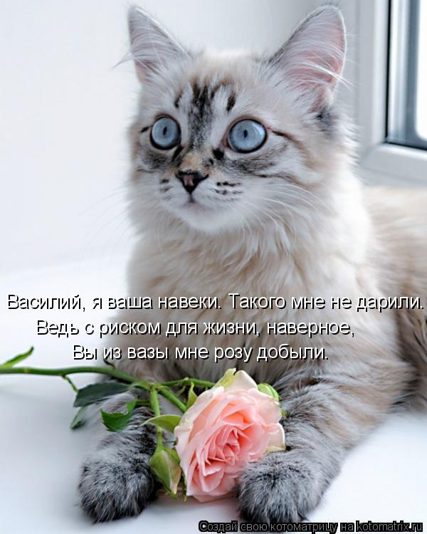 Котоматрица: Вы из вазы мне розу добыли. Василий, я ваша навеки. Такого мне не дарили. Ведь с риском для жизни, наверное,