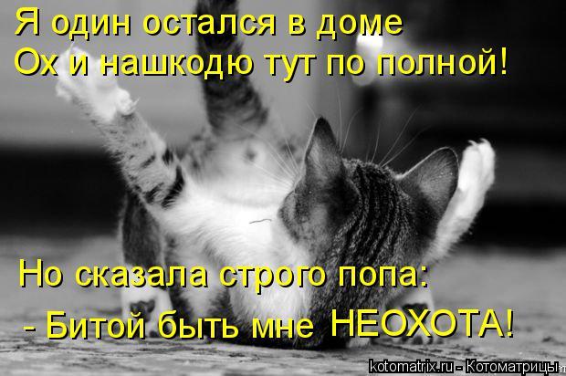 Котоматрица: Я один остался в доме Ох и нашкодю тут по полной! Но сказала строго попа: - Битой быть мне НЕОХОТА!
