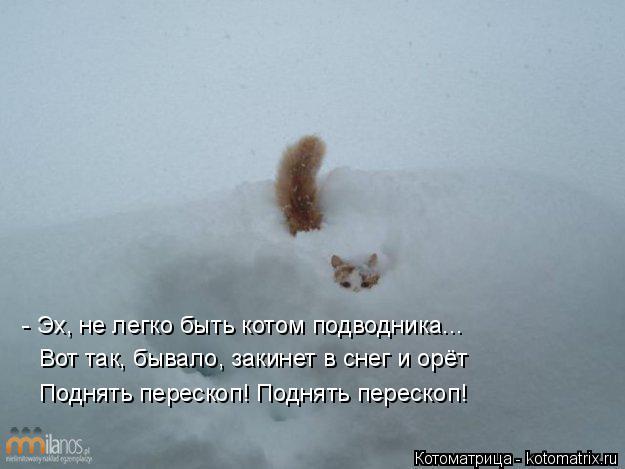котик ловит снег видео