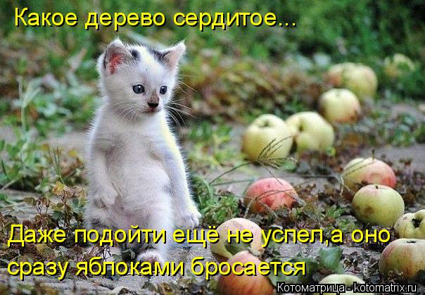 Котоматрица: Какое дерево сердитое... Даже подойти ещё не успел,а оно  сразу яблоками бросается