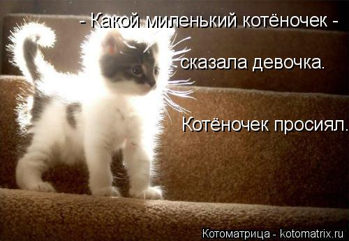 Котоматрица: - Какой миленький котёночек - сказала девочка. Котёночек просиял.