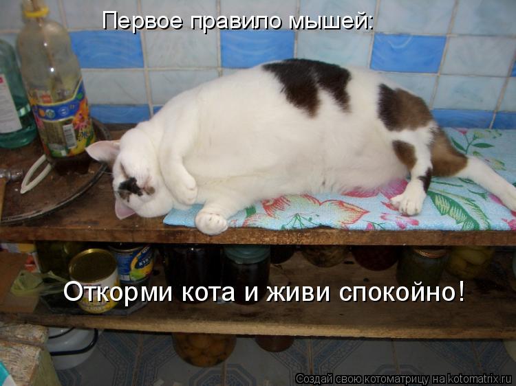 Котоматрица: Первое правило мышей: Откорми кота и живи спокойно!