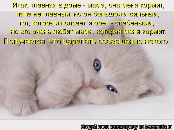 Котоматрица: но его очень любит мама, которая меня кормит.  папа не главный, но он большой и сильный,  тот, который ползает и орет - слабенький,  Получается,