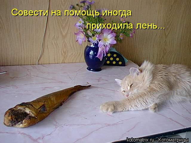 Котоматрица: Совести на помощь иногда приходила лень...