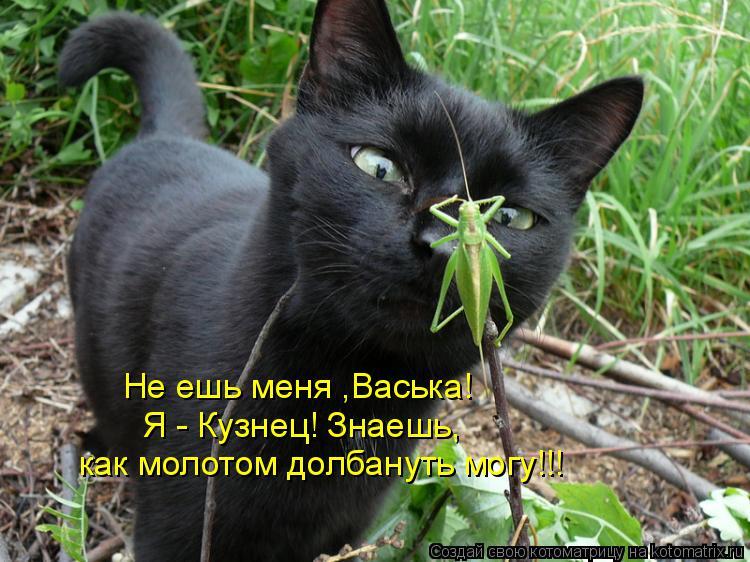 Котоматрица: Не ешь меня ,Васька! Я - Кузнец! Знаешь, как молотом долбануть могу!!!