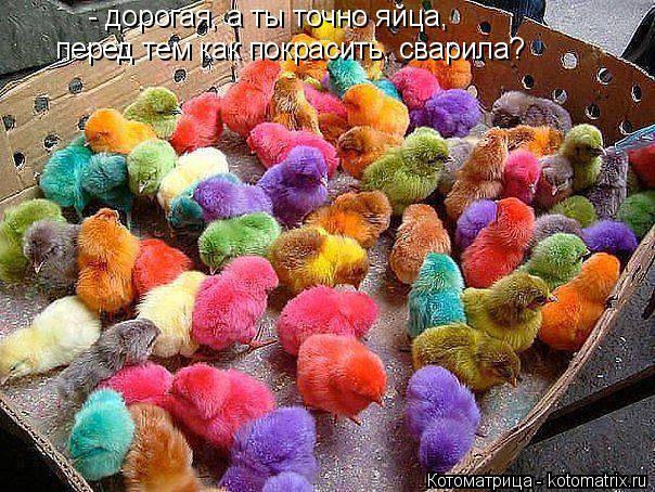 Котоматрица: - дорогая, а ты точно яйца,  перед тем как покрасить, сварила?