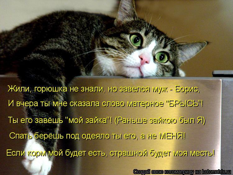 """Котоматрица: Жили, горюшка не знали, но завелся муж - Борис, И вчера ты мне сказала слово матерное """"БРЫСЬ""""! Ты его завёшь """"мой зайка""""! (Раньше зайкою был Я) Сп"""