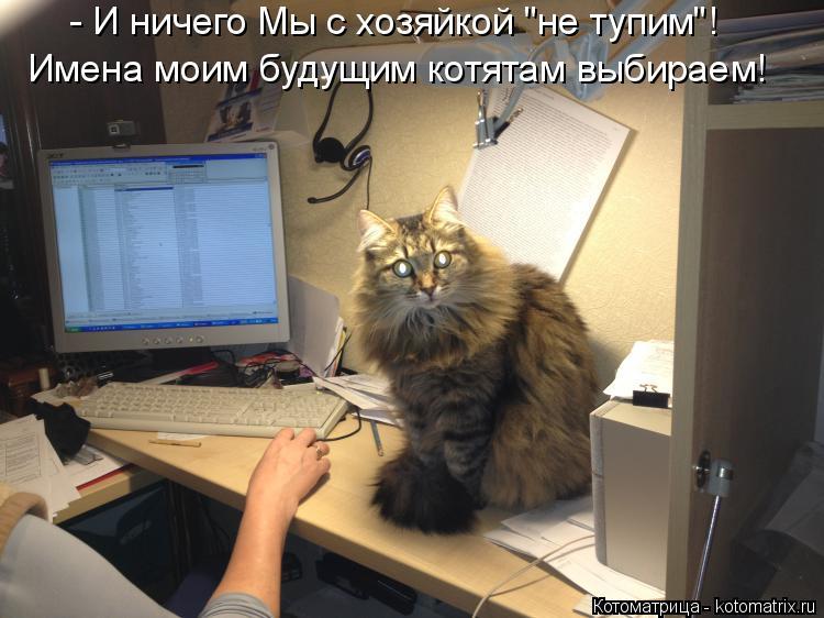 """Котоматрица: - И ничего Мы с хозяйкой """"не тупим""""! Имена моим будущим котятам выбираем!"""