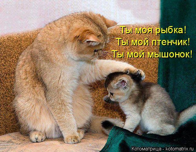 Котоматрица: Ты мой мышонок! Ты мой птенчик! Ты моя рыбка!