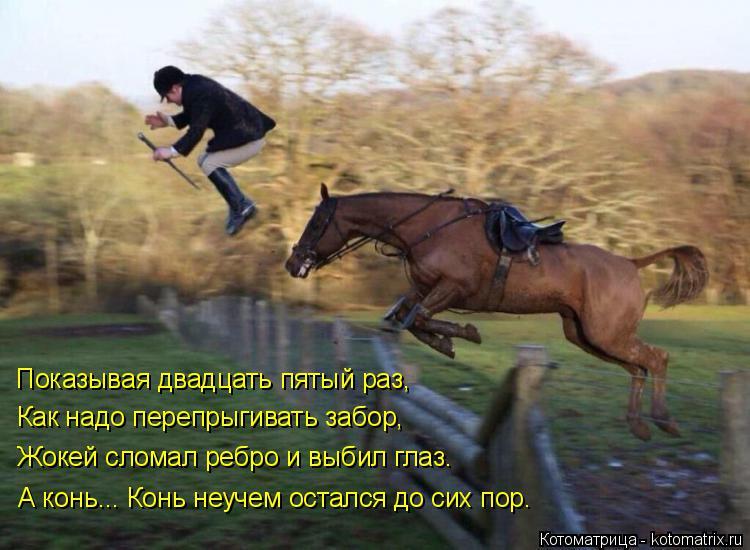 Котоматрица: Показывая двадцать пятый раз, Как надо перепрыгивать забор, Жокей сломал ребро и выбил глаз. А конь... Конь неучем остался до сих пор.