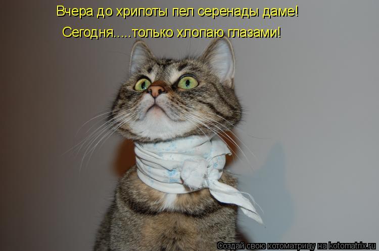 Котоматрица: Вчера до хрипоты пел серенады даме! Сегодня.....только хлопаю глазами!