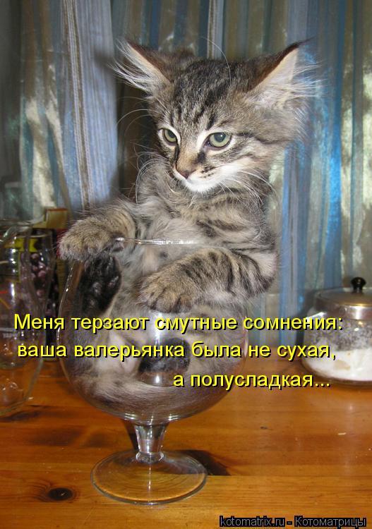 Котоматрица: Меня терзают смутные сомнения: ваша валерьянка была не сухая, а полусладкая...