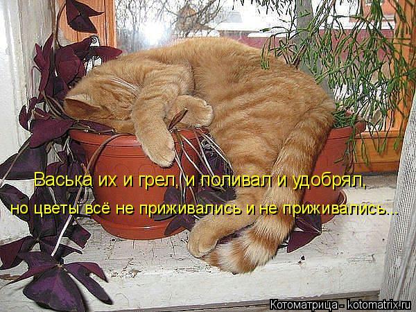 Котоматрица: Васька их и грел, и поливал и удобрял, но цветы всё не приживались и не приживались...