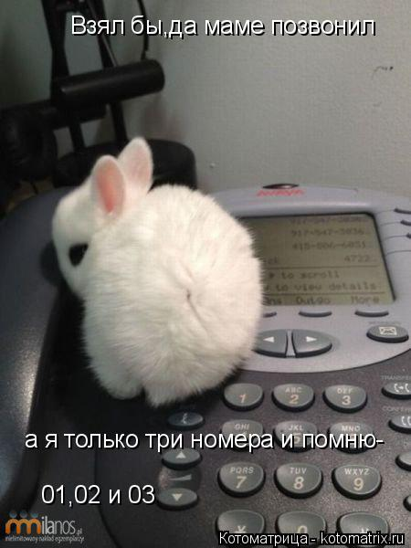 Котоматрица: Взял бы,да маме позвонил а я только три номера и помню- 01,02 и 03