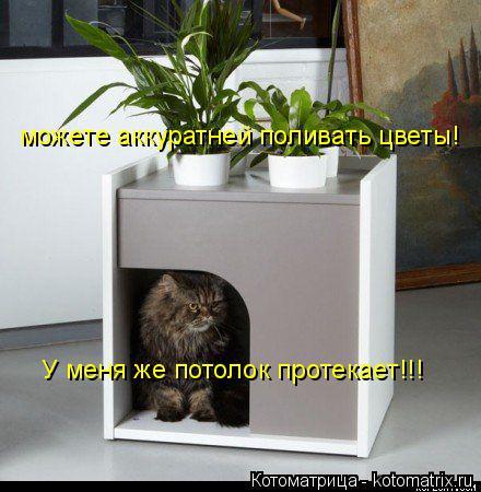 Котоматрица: можете аккуратней поливать цветы! У меня же потолок протекает!!!