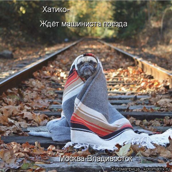 Котоматрица: Хатико- Ждёт машиниста поезда Москва-Владивосток