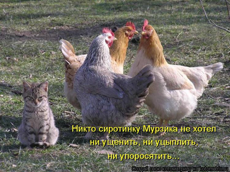 Котоматрица: Никто сиротинку Мурзика не хотел ни ущенить, ни уцыплить, ни упоросятить...