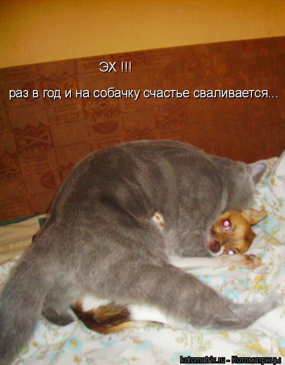 Котоматрица: ЭХ !!!  раз в год и на собачку счастье сваливается...