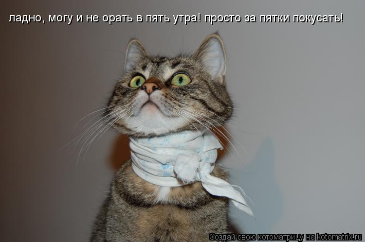 Котоматрица: ладно, могу и не орать в пять утра! просто за пятки покусать!